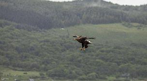 ظهور أكبر طائر جارح في بريطانيا لأول مرة منذ 240 عاما