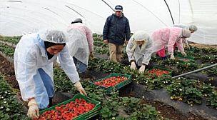 المغرب يعيد العاملات الموسميات العالقات عن طريق البحر