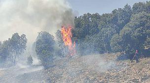Feux de forêts au Maroc  Un Bilan Lourd de forets dévastées  Durant la dernière vague de chaleur exceptionnelle