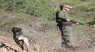 Amateurs de la chasse à vos fusils:  La chasse de la tourterelle ouverte au Maroc  du 17 juillet au 06 septembre 2021