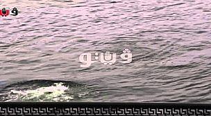 فتاة مصرية تنتحر في النيل هرباً من التحرّش