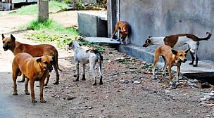 الكلاب الضالة والمسعورة تشكل رعبا حقيقيا بمنطقة اغمات بإقليم الحوز