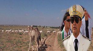 """إرسموكن : ساكنة """" إقلالن """" و """" الهري """" تندد ضد هجمات الرعاة الرحل وتطالب عامل الإقليم بالتدخل العاجل"""